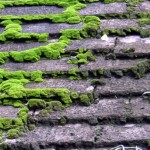 Benefits of Moss Prevention